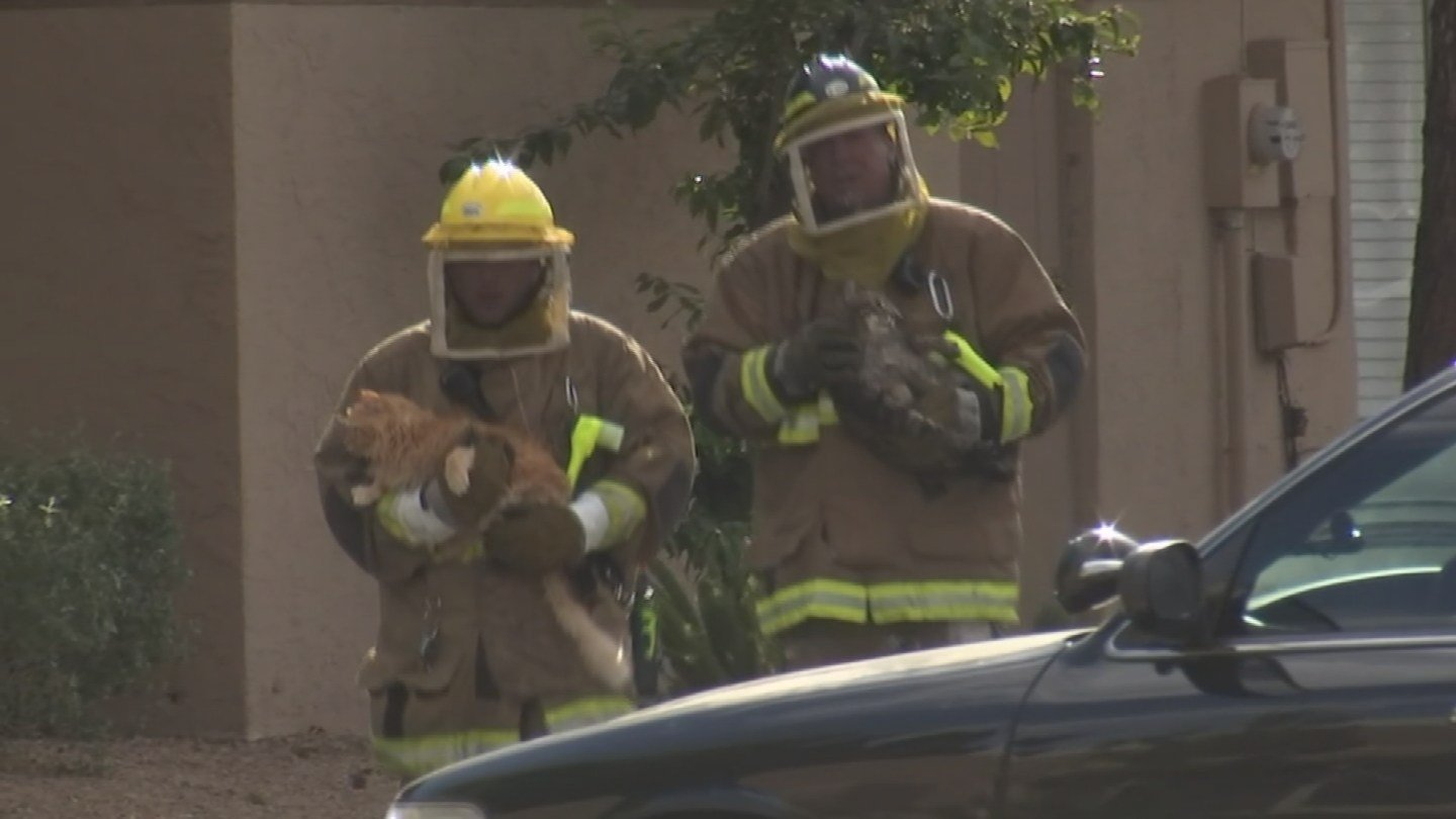 Firefighters rescued two cats. (Source: KPHO/KTVK)