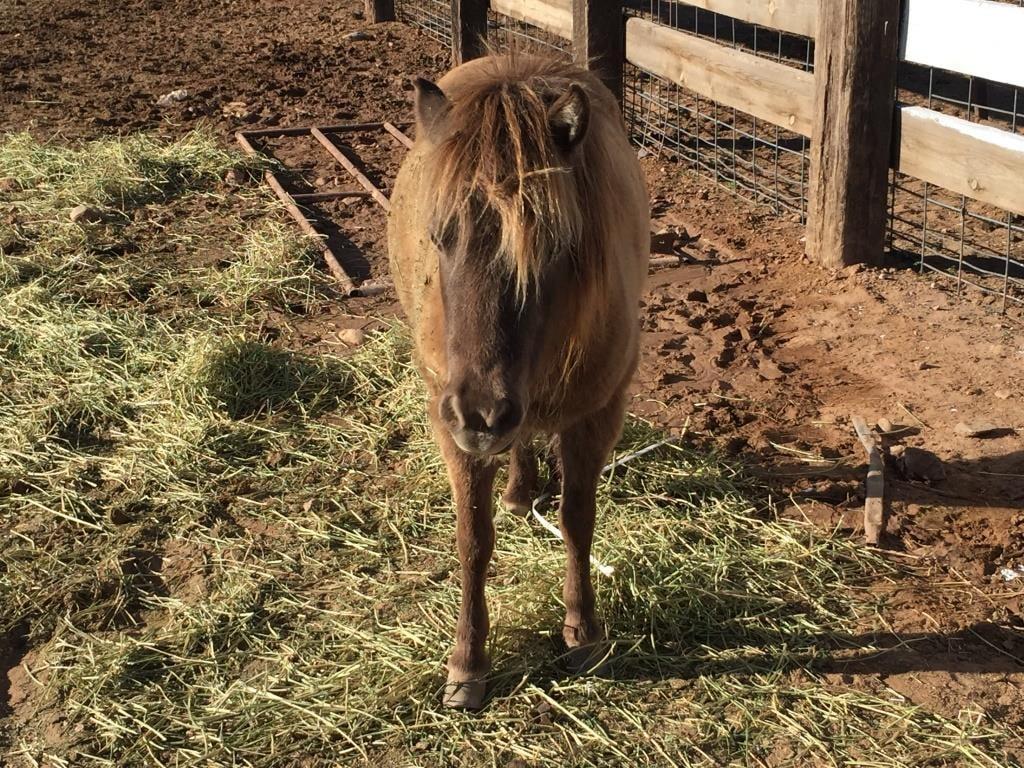 Sheriff's deputies rescue miniature horse stuck in cattle guard (Source: Yavapai County Sheriff's Department)