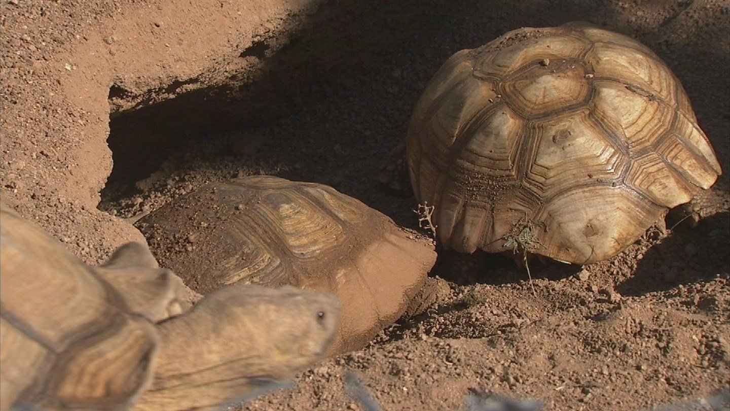 The Phoenix Herpetological Society is hoping people will donate during Tuesday's Arizona Gives Day (Source: KPHO/KTVK)