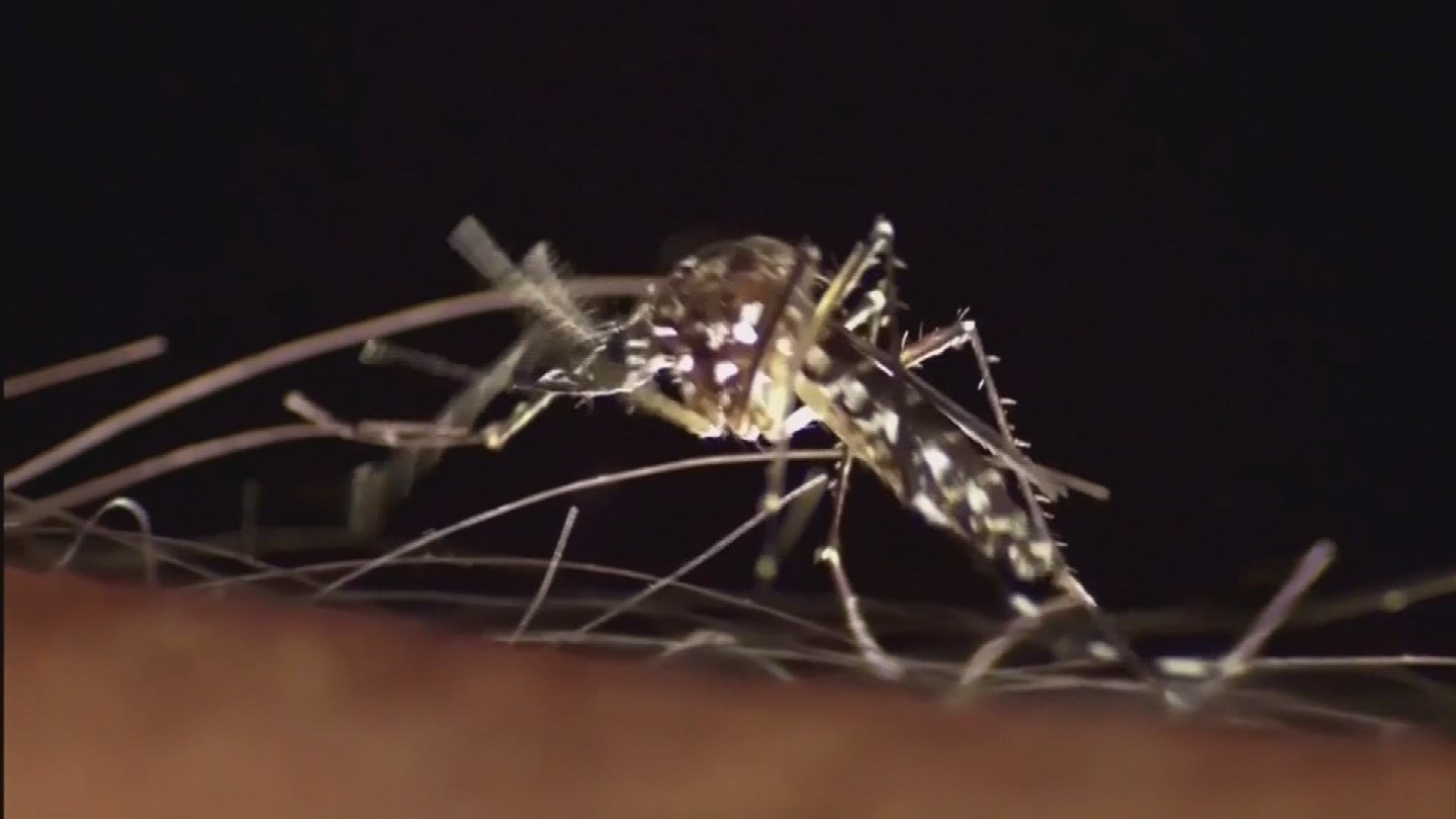 Arizona does have the mosquito that carries the Zika virus (Source: KPHO/KTVK)