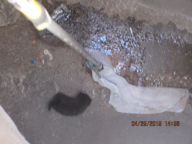 Kitten rescued from manhole in Phoenix (Source: Arizona Humane Society)