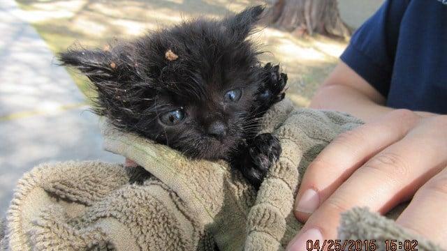 Kitten rescued from manhole in Phoenix (Source: Arizona Humane Society)