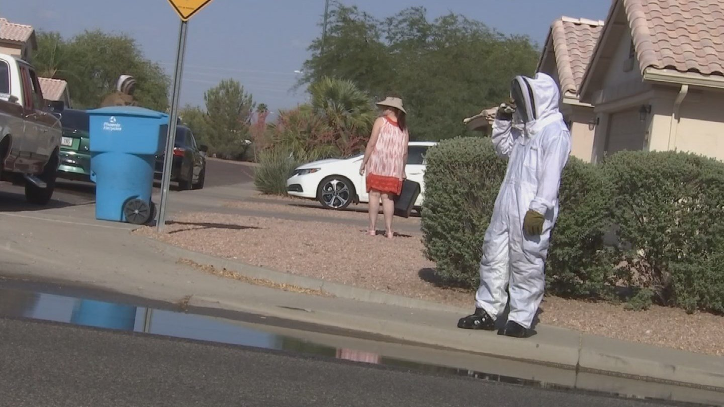 A man was taken to the hospital after being attacked by bees in Phoenix. (Source: KPHO/KTVK)