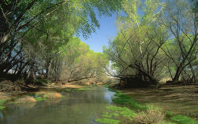 The San Pedro River is one of only two major rivers that flow north out of Mexico into the United States and is one of the last large undammed rivers in the Southwest. (Source: Harold Malde via Nature.org)