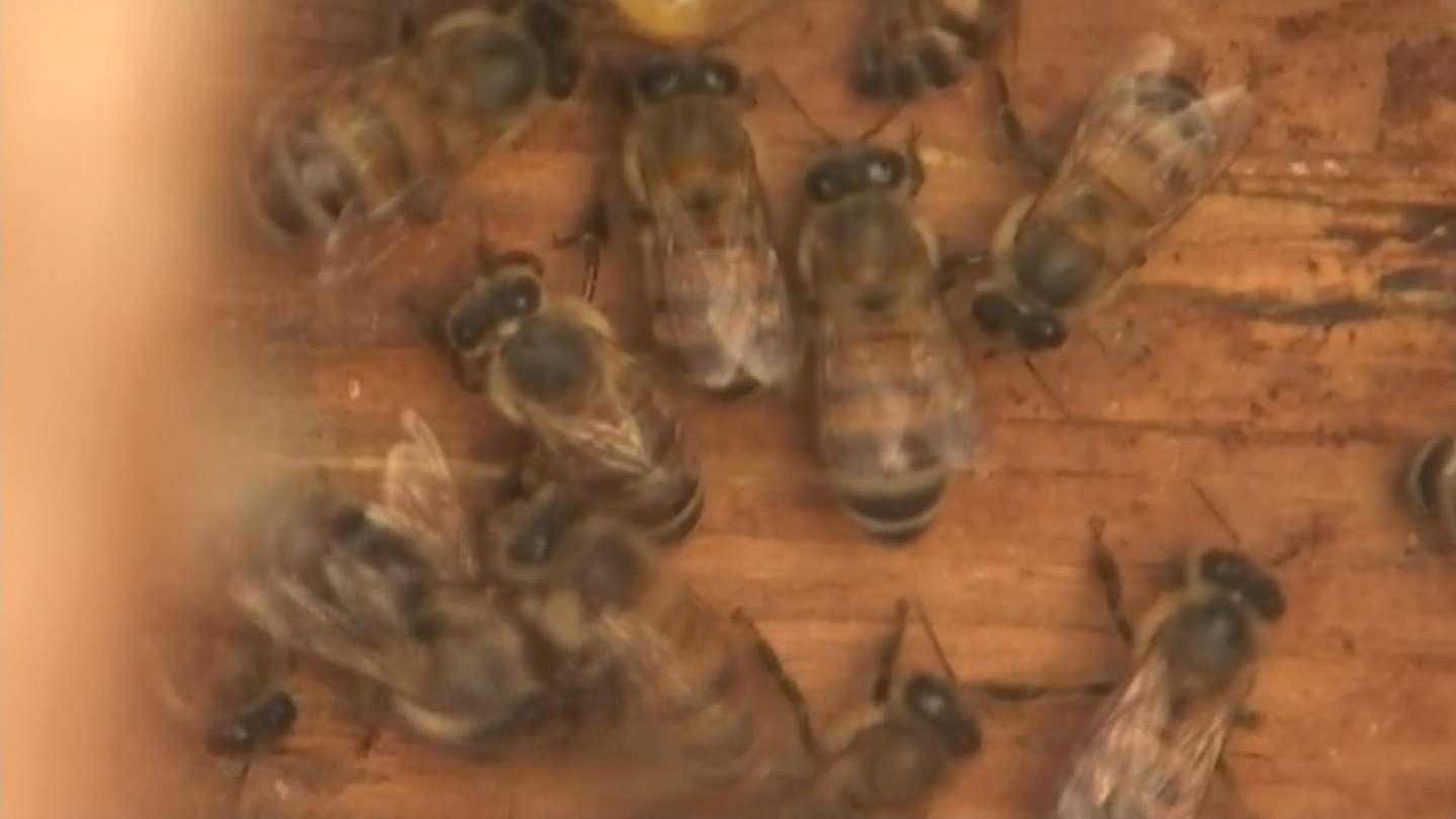 It's been an active bee season for the Valley so far in 2016. (Source: KPHO/KTVK)