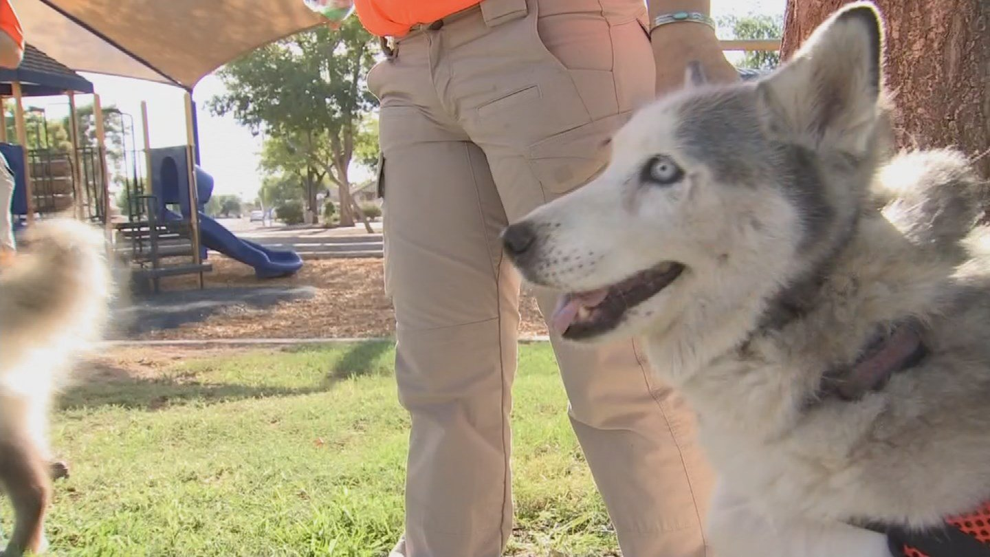 Arizona Search Track and Rescue has 25 highly-trained dogs that help them with searches. (Source: KPHO/KTVK)