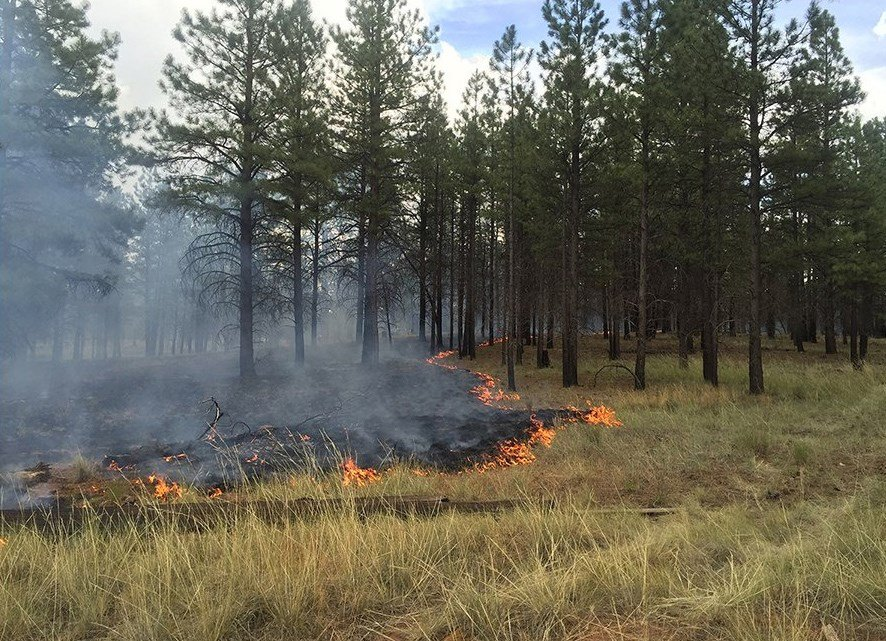 The Coco Fire is burning 6 miles southeast of Tusayan. (Source: Kaibab National Forest)