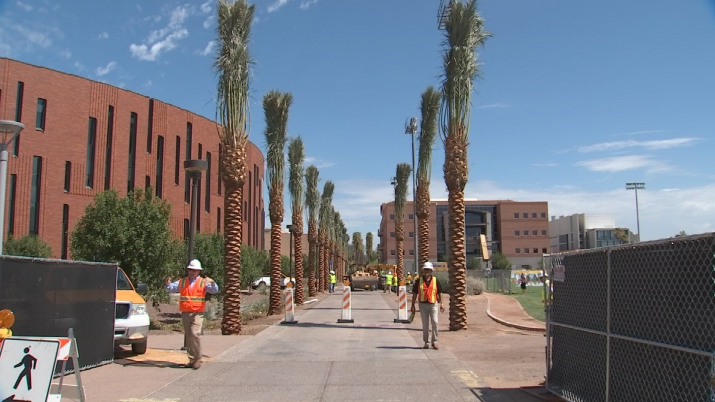 ASU is adding new palm trees to iconic Palm Walk. (Source: KPHO/KTVK)