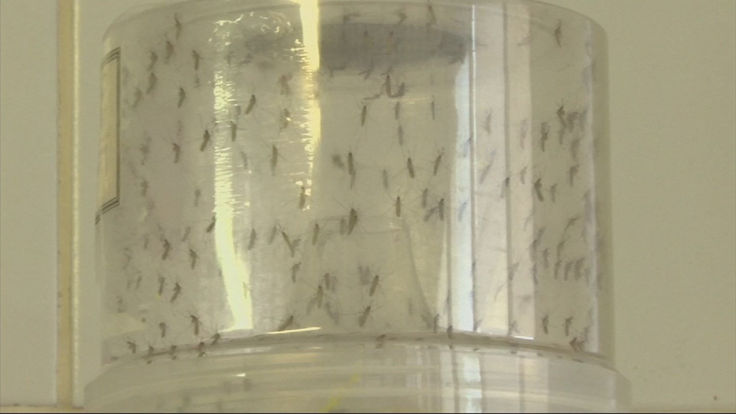 DSHS: El Paso man contracts Zika after traveling to Miami