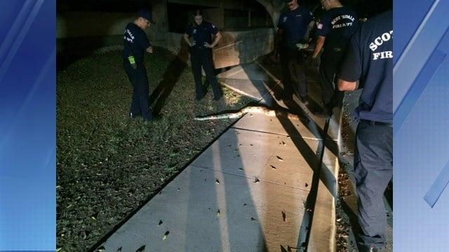 Area woman finds 7-foot-long boa snake near trash