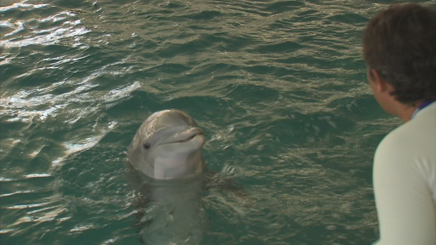 The dolphins came from California. (Source: KPHO/KTVK)