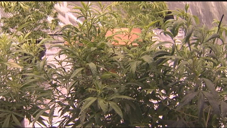 Nine states are deciding the fate of recreational or medical marijuana. (Source: KPHO/KTVK)