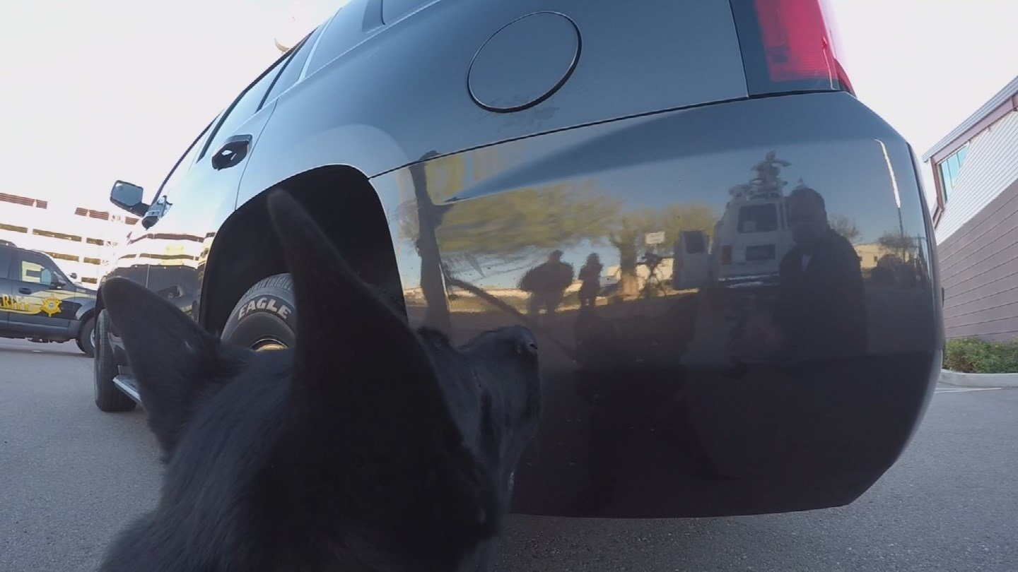 In order to keep them safe, training of the MCSO K-9 dogs has changed over the past few years. (Source: KPHO/KTVK)