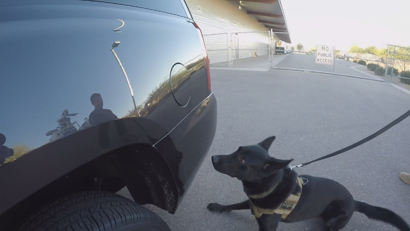 K-9s take a more passive approach when alerting their handlers. (Source: KPHO/KTVK)