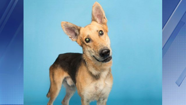 Bryan. (Source: AZ Humane Society)