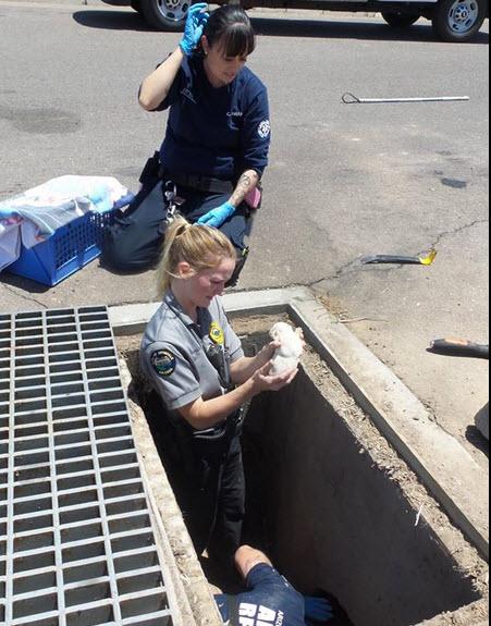 Avondale police rescue litter of puppies from drain cbs for Avondale motor vehicle division avondale az