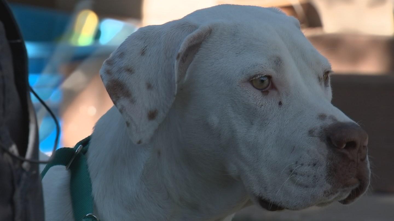 phoenix passes tethering law to protect dogs arizona u0027s family
