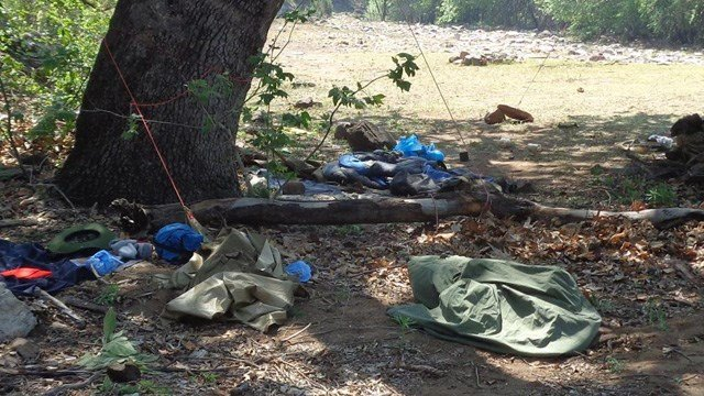 Bear that attacked camper near young ariz euthanized for Camping and fishing in arizona