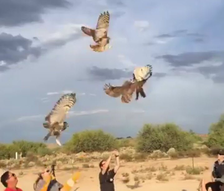 4 orphaned owls are released back into the wild 3tv cbs 5 for Az game fish