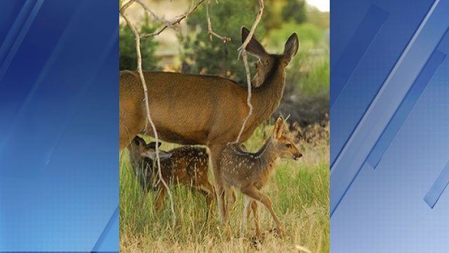 Azgfd reminds public to leave baby wildlife alone for Arizona game and fish locations