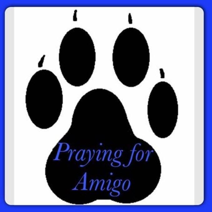 Sad Update Kingman Police K 9 Amigo Has Died on Weather Page Az 10 Day Forecast
