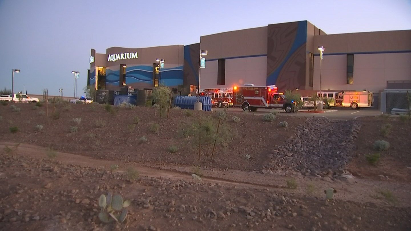 ... Department was called Sunday to OdySea Aquarium. (Source: KPHO/KTVK