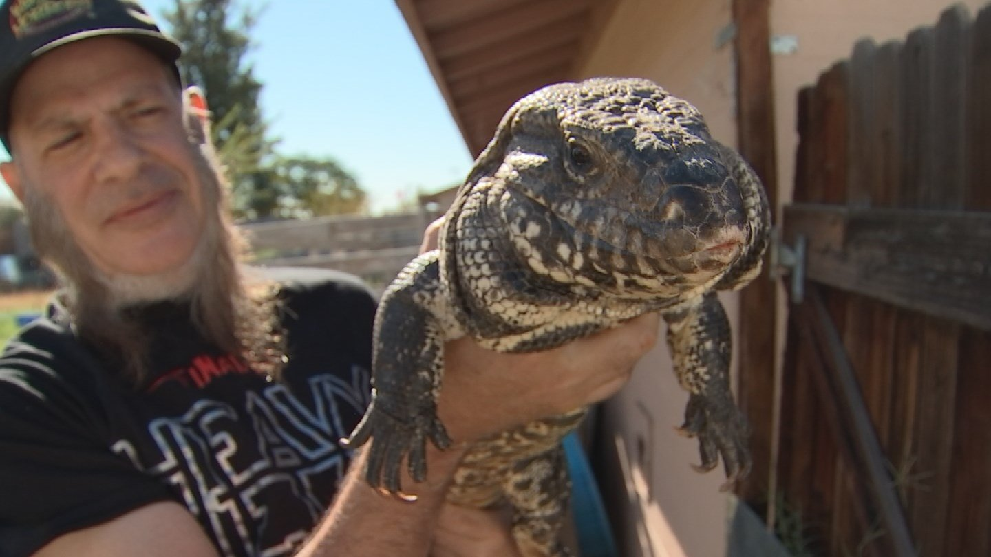 Tale Of Abducted Lizard Has Happy Ending For Phoenix Owner