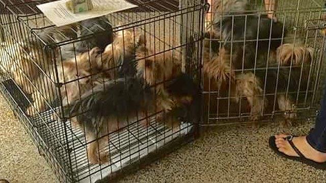 Home For Good Dog Rescue Az