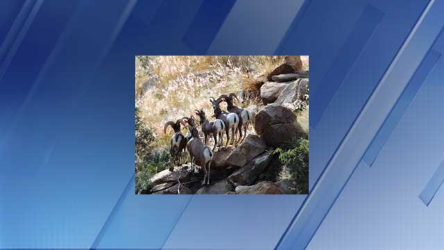 Pneumonia suspected in another bighorn sheep death 3tv for Az game fish